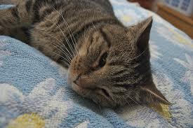 cat at rest